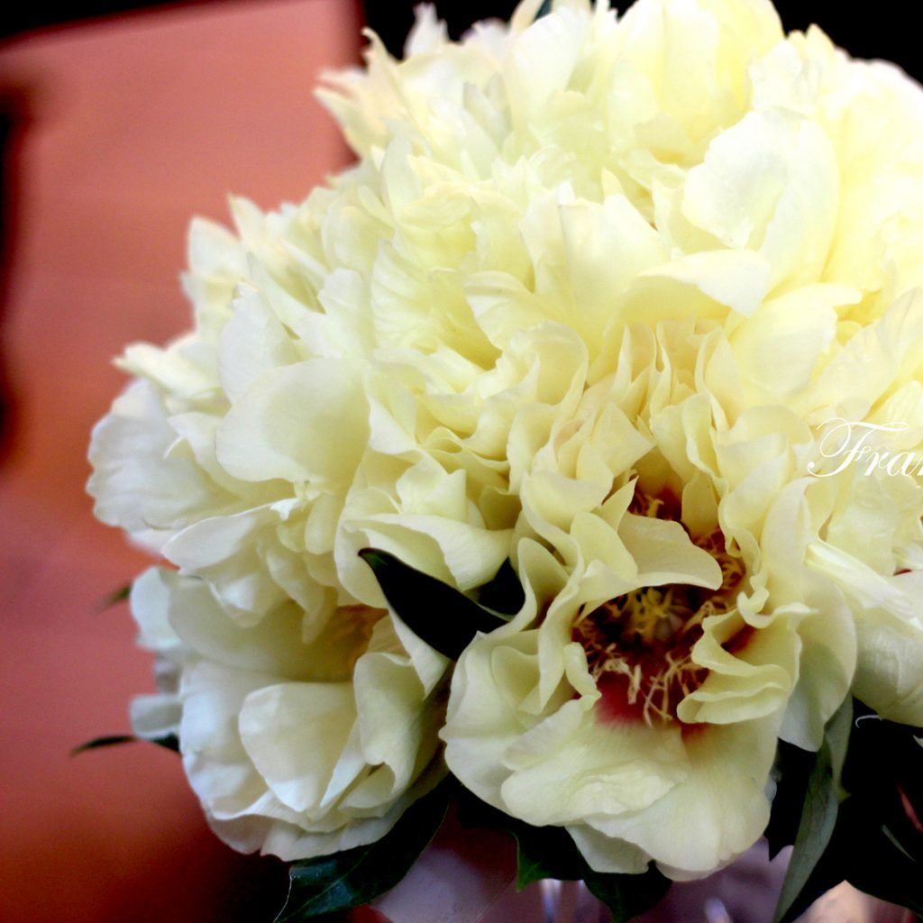 Yellow Peonia